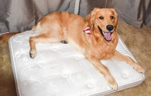 Pet Beds - Holder Mattress